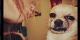 Cuando tu perro te hace la cobra