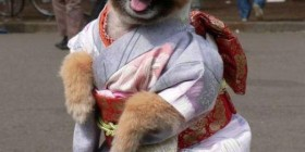 Disfraces perrunos: Geisha