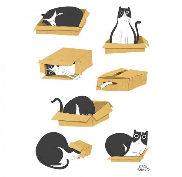 El gato y la caja