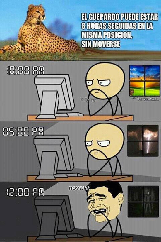 El guepardo puede estar horas sin moverse