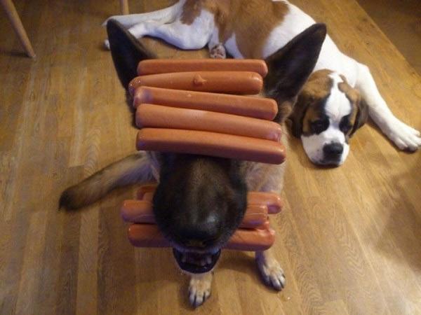 El perro más obediente del mundo