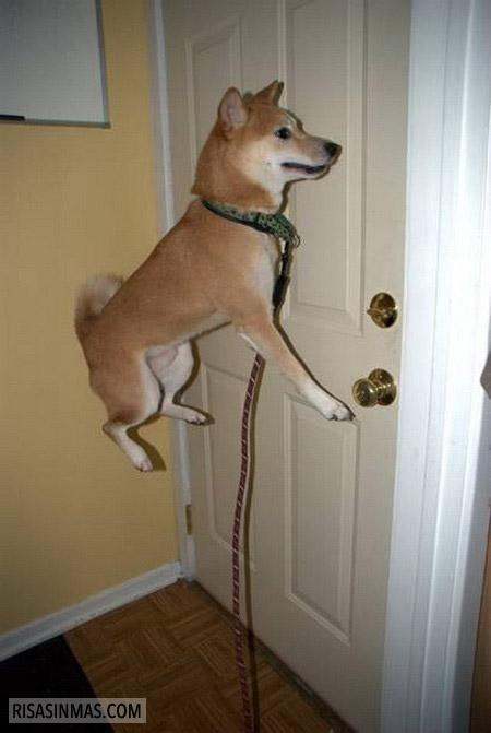 El perro que levita