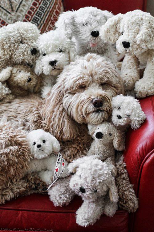 Encuentra el perro