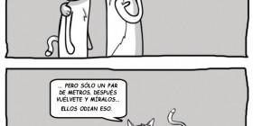 Entrenamiento gatuno
