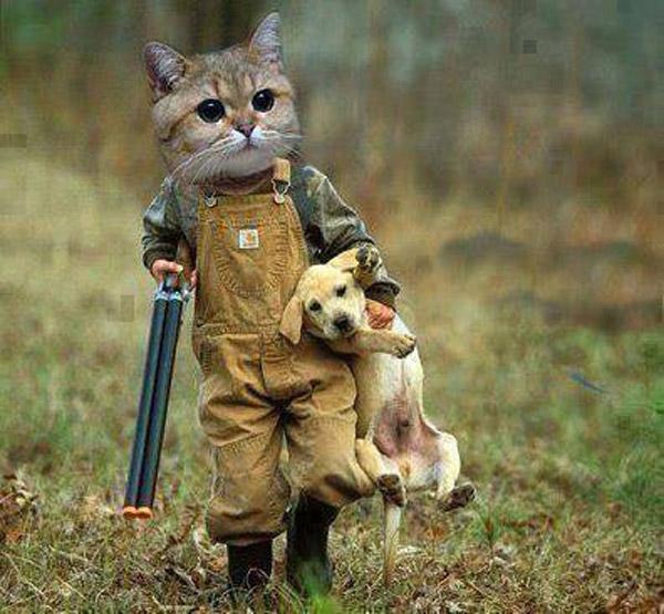 Gatete cazador