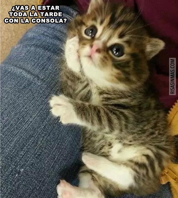 Gatito preguntando