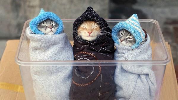 Gatitos calentitos