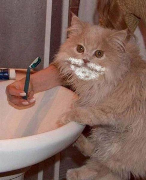 Gato afeitándose