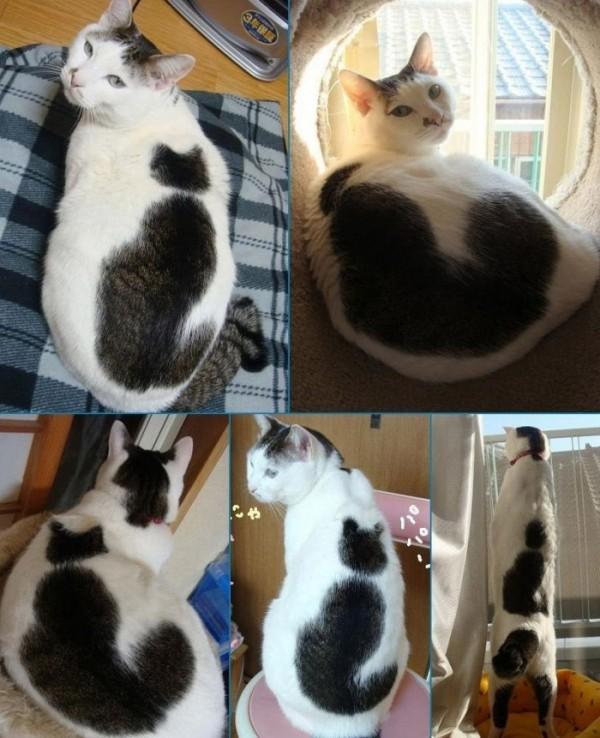 Gato con mancha de gato