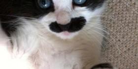 Gato disfrazado de Mario Bros