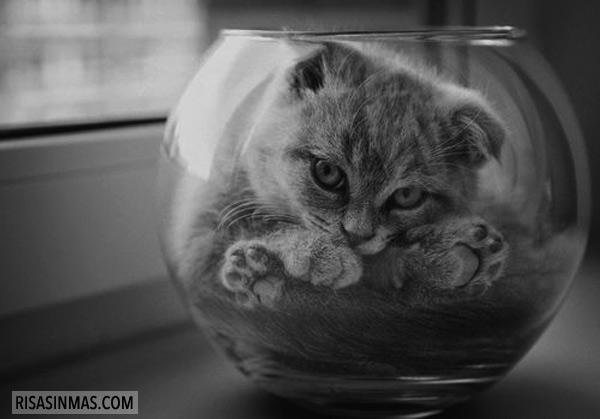 Aquí hay gato encerrado