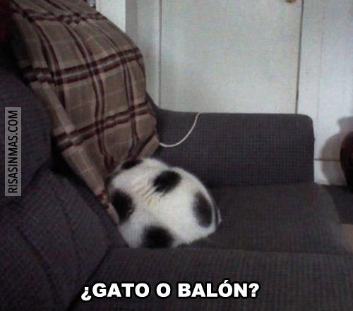 ¿Gato o balón?