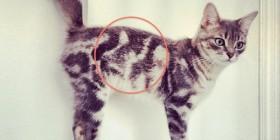 Gato que lleva su propio autoretrato