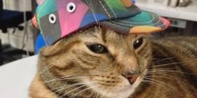 Gato rapero