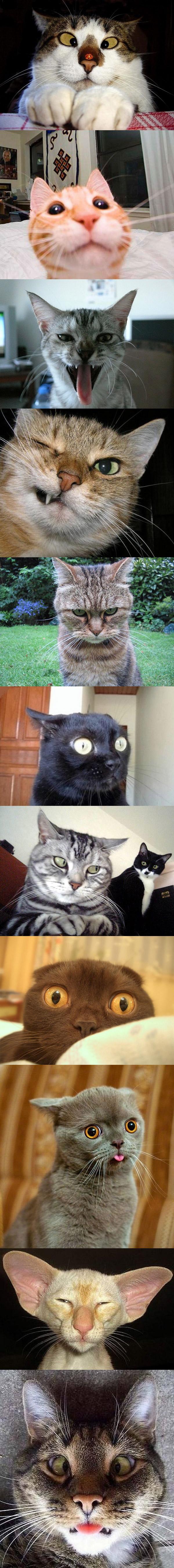 Gatos con caras graciosas