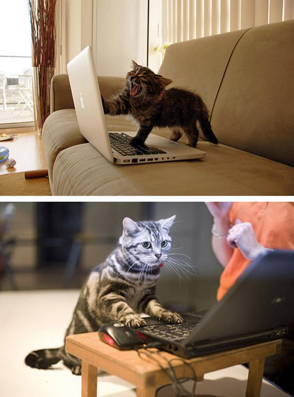 Gatos usando el portátil