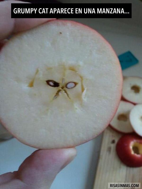 Grumpy cat aparece en una manzana
