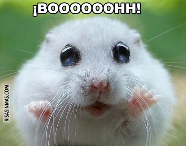 Hamster asustando