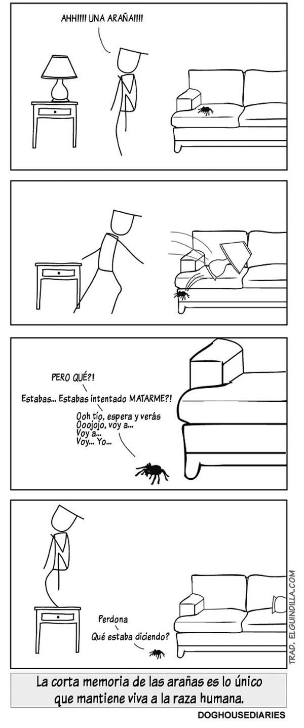 La corta memoria de las arañas
