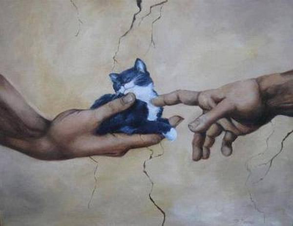 La creación del gato