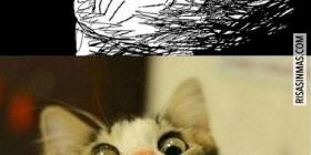 ¡Mi gato!
