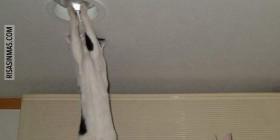 Mi gato me cambia las bombillas