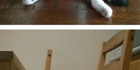 Mi gato se sienta sobre su trasero