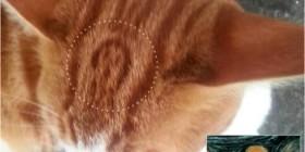 Mi gato tiene el grito en su pelo