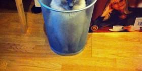Mi gato y la aspiradora