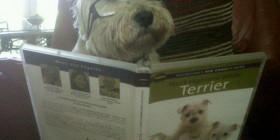Mi perro es un intelectual