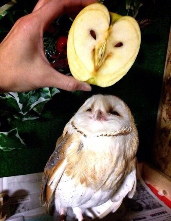 Parecidos razonables: Buho y manzana