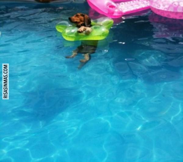 Perrete en su clase de natación