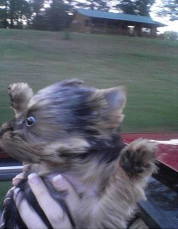 Perro amante de la velocidad