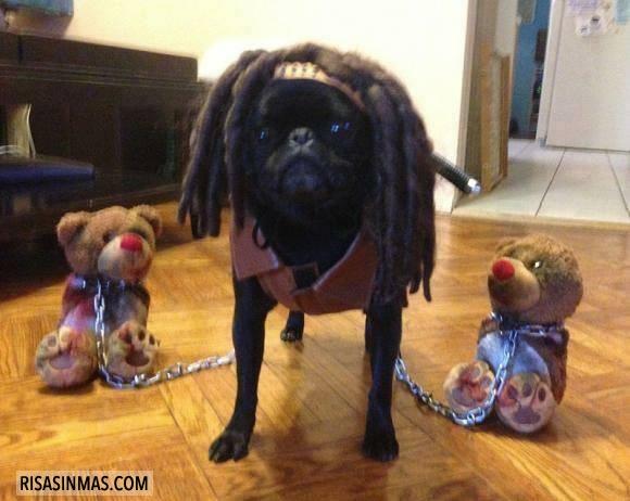 Perro disfrazado de Michonne