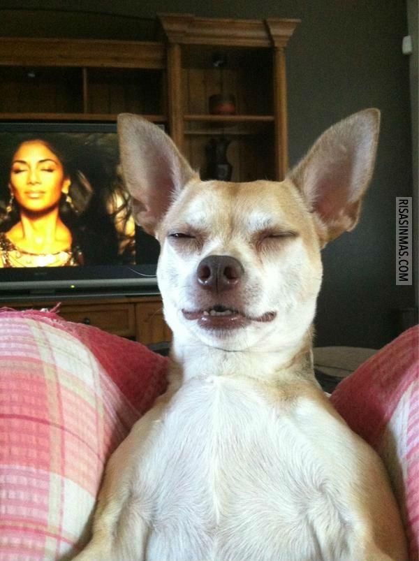 Perro imitador