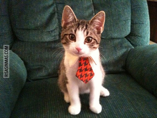 Preparado para ir a la oficina
