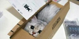 Primeros envíos de gatos por Amazon