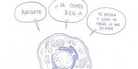 ¿Qué es una célula madre?