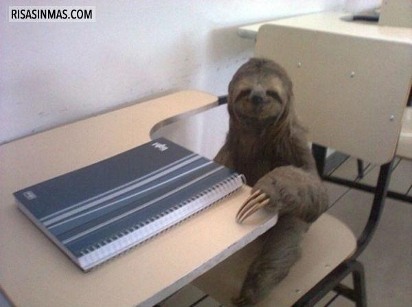 Un estudiante perezoso
