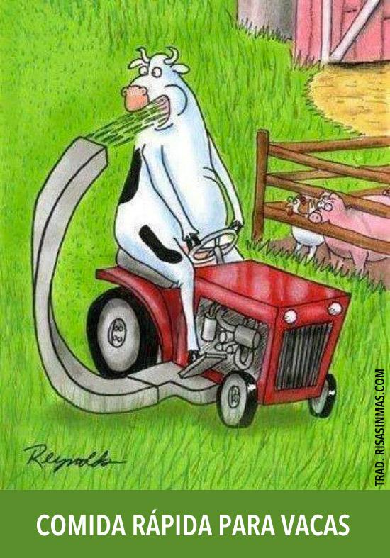 Comida rápida para vacas