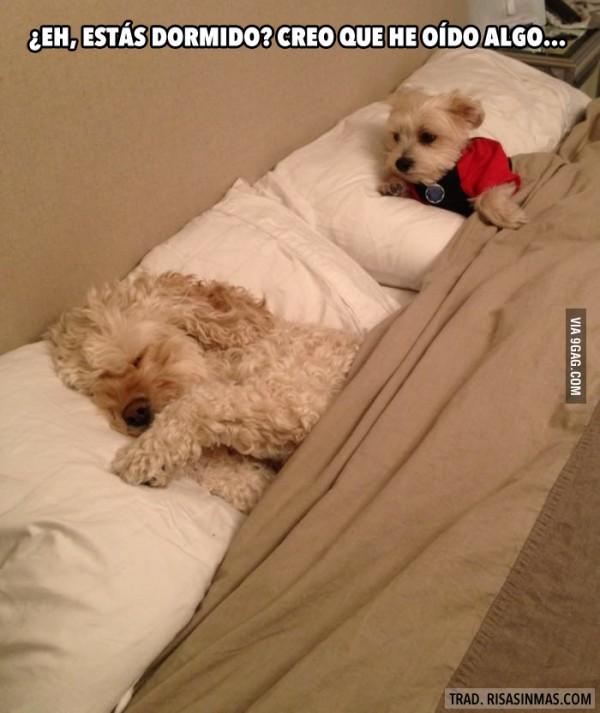 ¿Estás despierto?