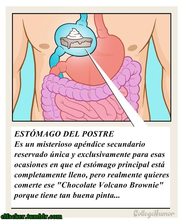 Estómago del postre