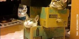 ¡Fiesta de gatos!