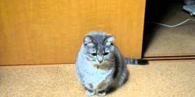 Gato pidiendo comida