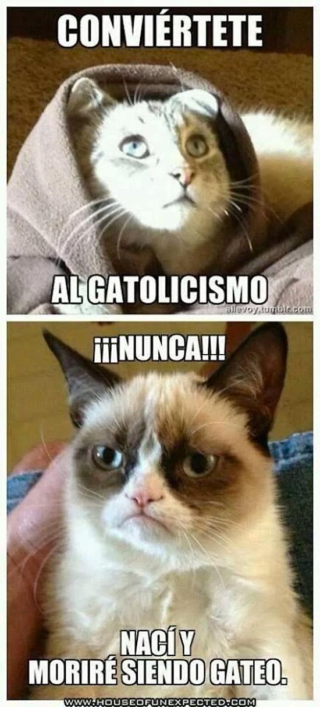 Conviértete al gatolicismo