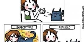 Gatos: expectativas y realidad