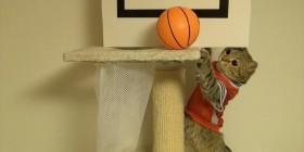 Gatos jugando al baloncesto