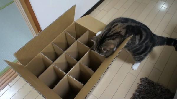 La caja donde no puede entrar Maru