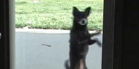 Perro bailando salsa