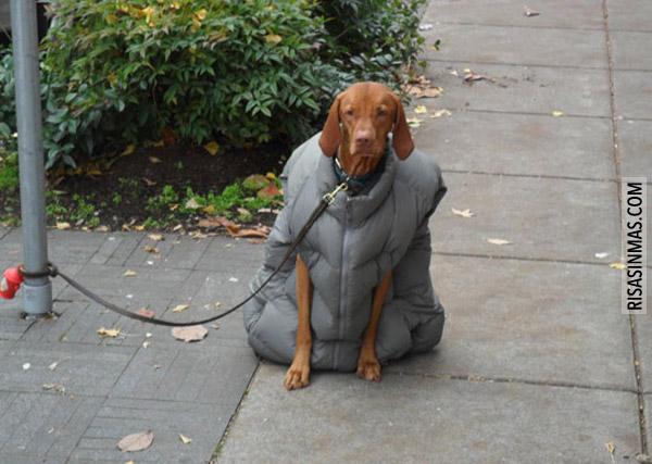 Perro con chaleco